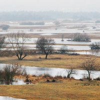Early Spring Landscape In The Biebrza Marshes, Poland