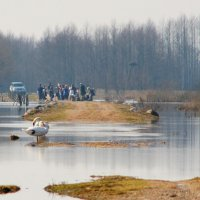 Coexistence In The Biebrza Marshes, Poland