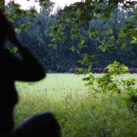 Watching European Bison In The Bialowieza Forest, Poland