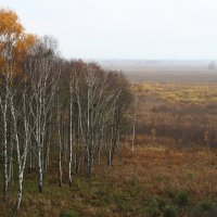 Autumn At Biebrza Marshes