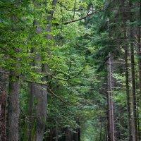 Białowieża Forest, Poland