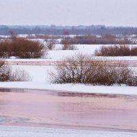 Biebrza Winter Landscape