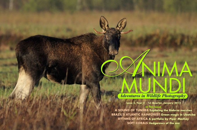 ANIMA MUNDI Magazine Cover