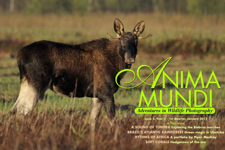 ANIMA MUNDI Magazine Cover
