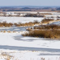 Winter Landscape In The Biebrza Marshes, Poland