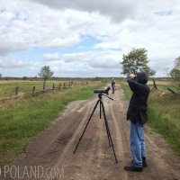Birding In The Biebrza Marshes, Poland