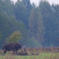 Lookout For Bison In The Białowieża Forest, Poland