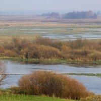 Biebrza Marshes, Poland
