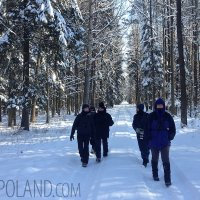 Winter Wildlife Tracking In The Białowieża Forest, Poland