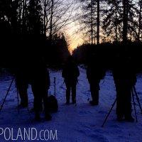 Dawn In The Białowieża Forest, Poland