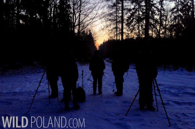 Winter Białowieża Forest & Biebrza Marshes Tour Report, Feb 2014