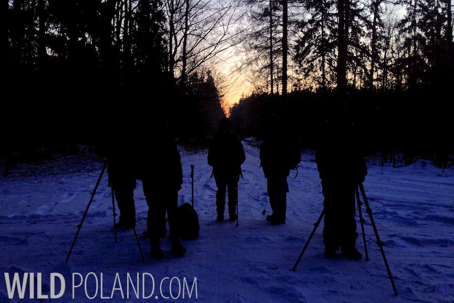 Winter Białowieża Forest & Biebrza Marshes, Feb 2014