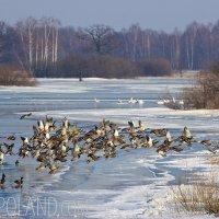 Biebrza Marshes Winter Landscape, Poland