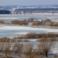 A Winter Landscape In The Biebrza Marshes, Poland