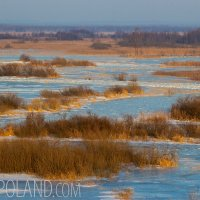 A Winter View In The Biebrza Marshes, Poland