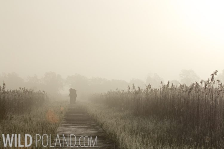 Dawn In The Biebrza Marshes, Poland