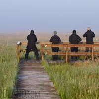 Watching Aquatic Warblers In The Biebrza Marshes, Poland
