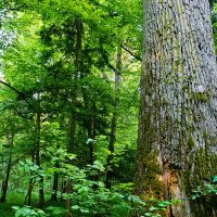 Białowieża Forest by Michael Eick
