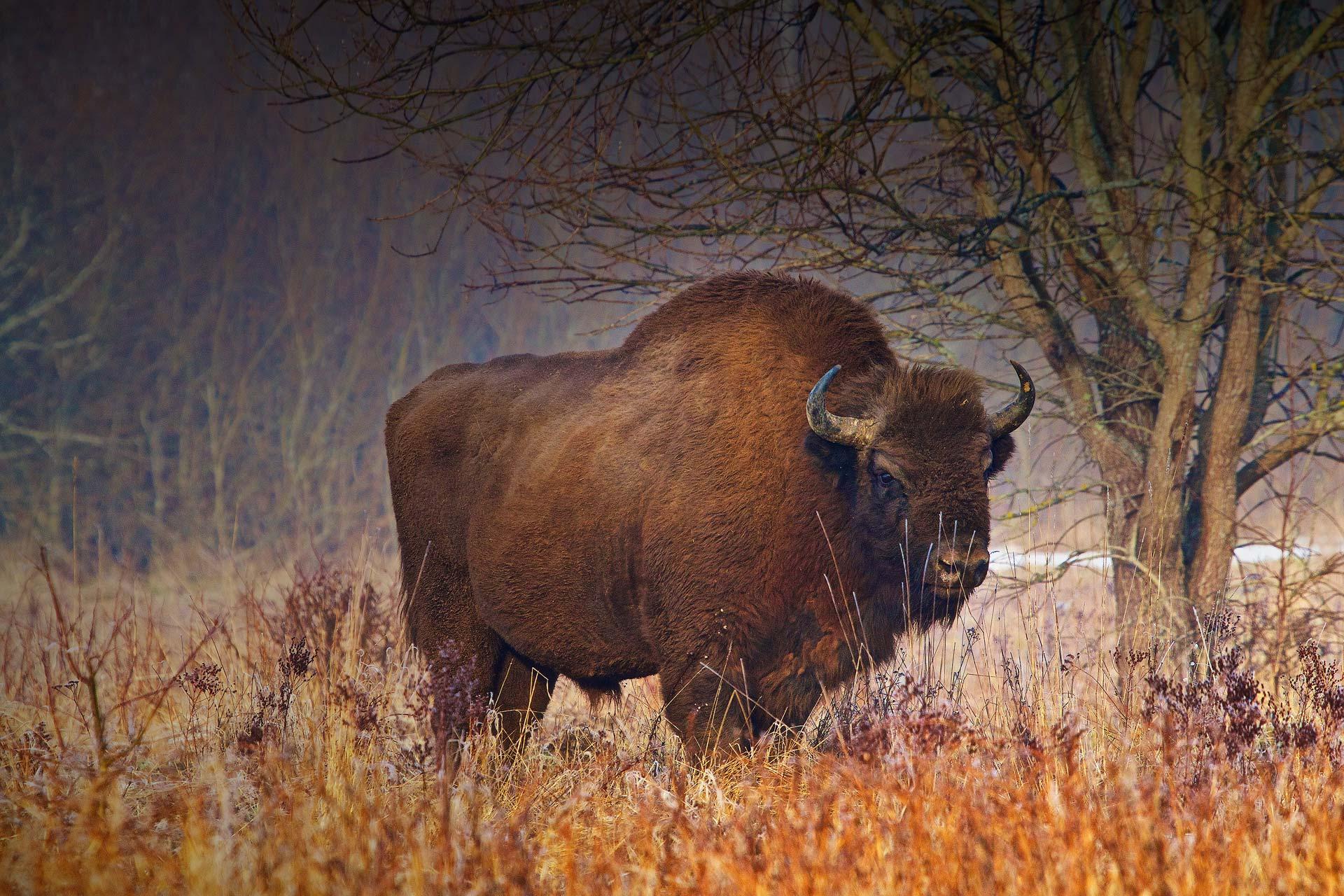 Wild Poland – Wildlife watching in Poland
