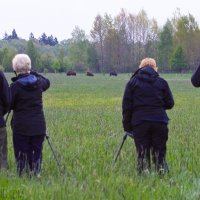 Watching European Bison In The Białowieża Forest