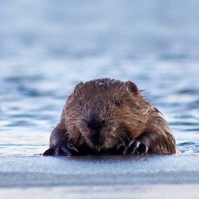 Beaver Boat