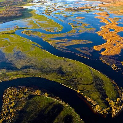 Wild Marshes