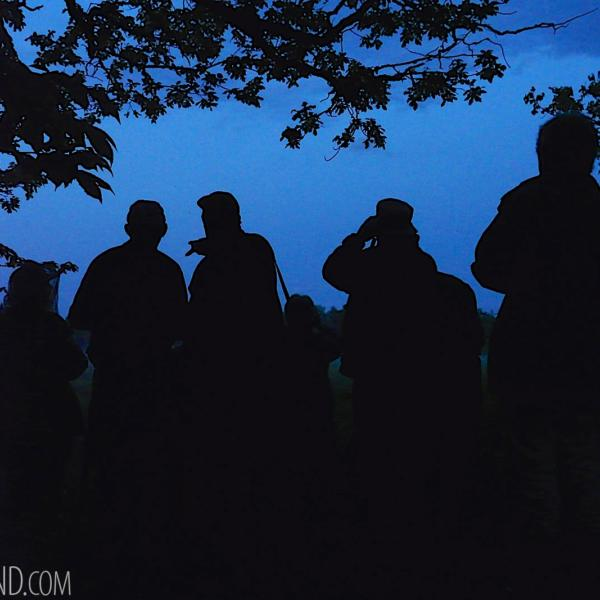 Group At Our Mammal Patrol In The Białowieża Forest At Dawn
