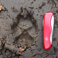 Wolf footprint in the mud, Wolf Tracking trip, Oct 2013