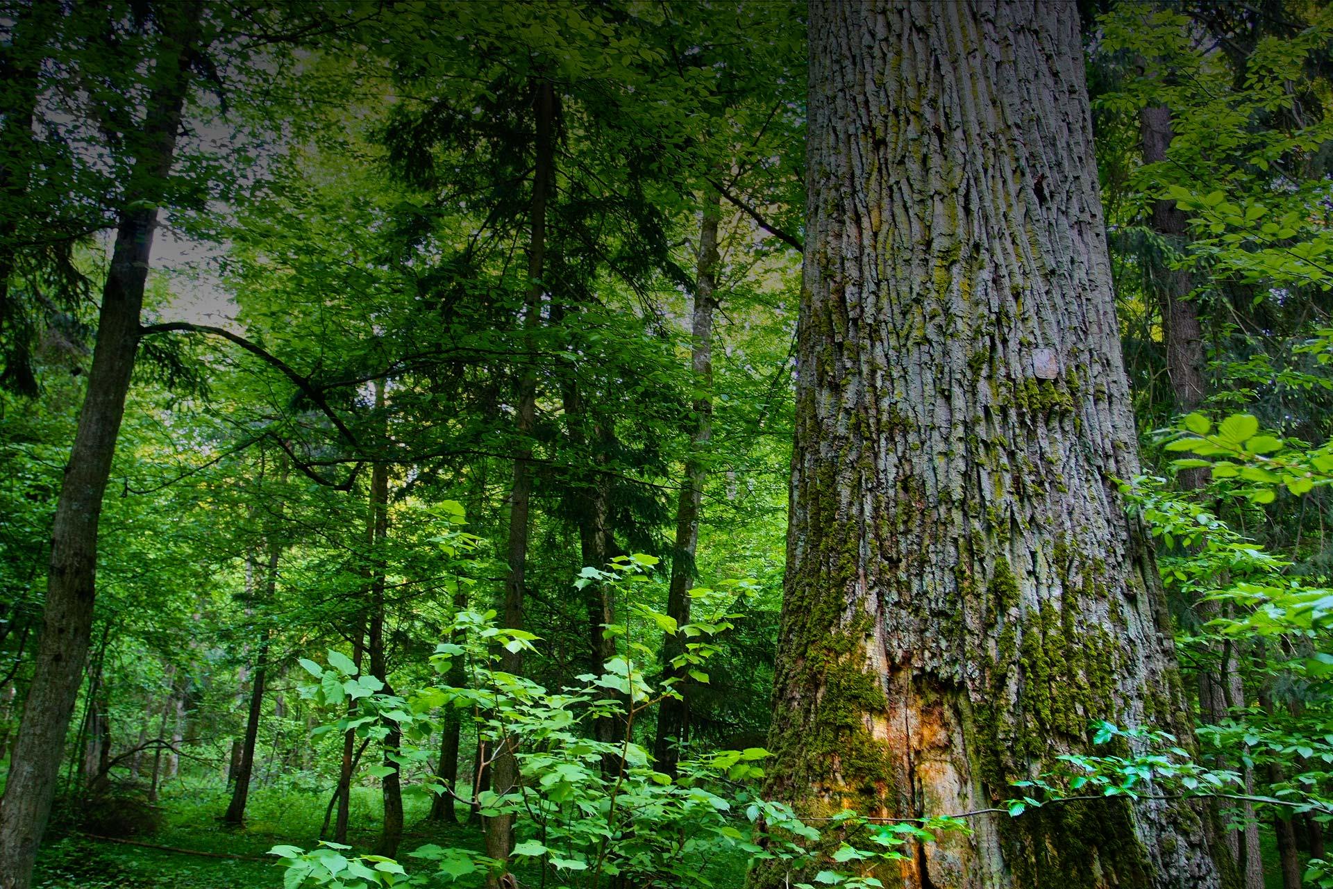 Białowieża Forest | Wild Poland