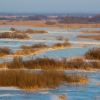 Winter In The Biebrza Marshes