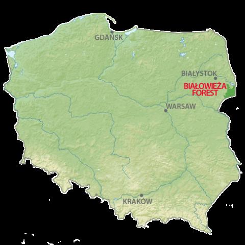 map-bialowieza-transparent-08