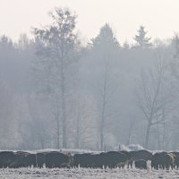 A Herd Of European Bison Seen During Our Bison Safari Trip