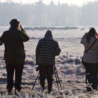 Watching-european-bison-herd-bialowieza-forest-wildpoland-03