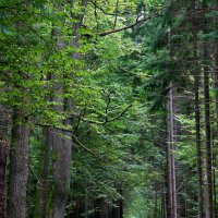 Bialowieza-forest-poland-17