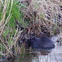 Wildpoland-25-april-1-may-2015-photo-L-Mazurek-17
