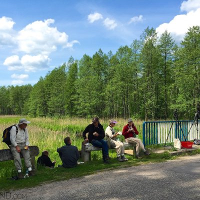 Having Lunch In The Białowieża Forest