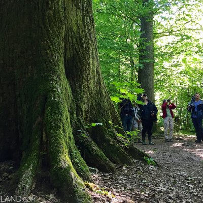 In The Strict Protection Area Of The Białowieża Forest