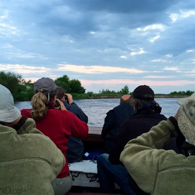 Watching Beavers In The Narew River, Biebrza Marshes