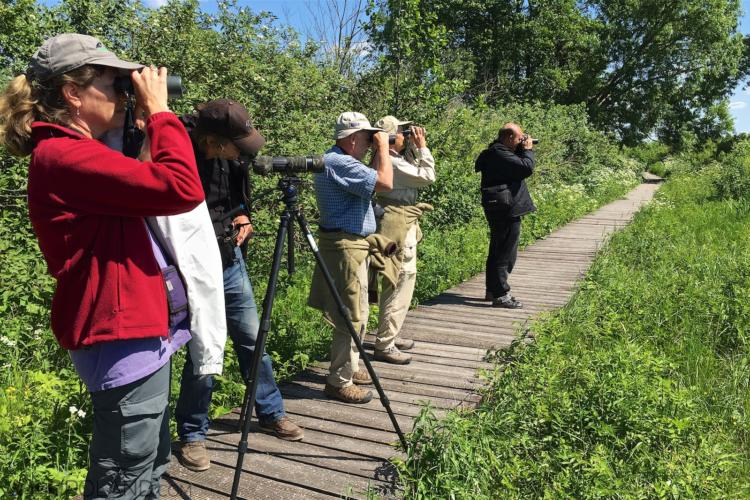 Birdwatching In The Biebrza National Park