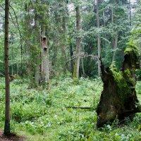 Bialowieza-national-park-wildpoland-11