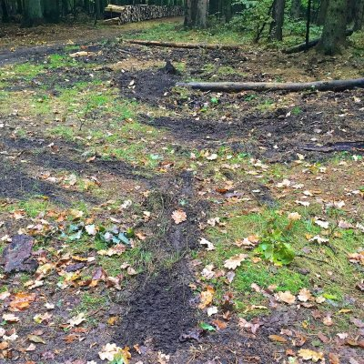 Wolf Territory Marking In The Białowieża Forest