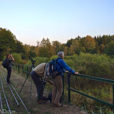 Birdwatching In The Białowieża Forest