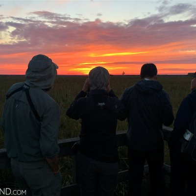 Watching Cranes At Sunset In The Biebrza National Park