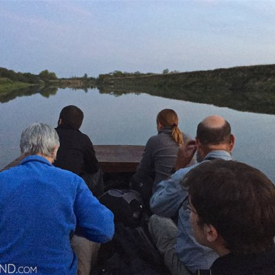 Watching Beavers On The Narew River, Biebrza Marshes