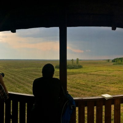 Looking Out For Elks (Moose) In The Biebrza National Park