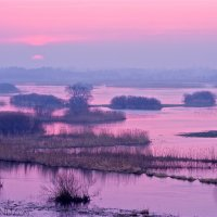 Biebrza Marshes In Early Spring By Łukasz Mazurek