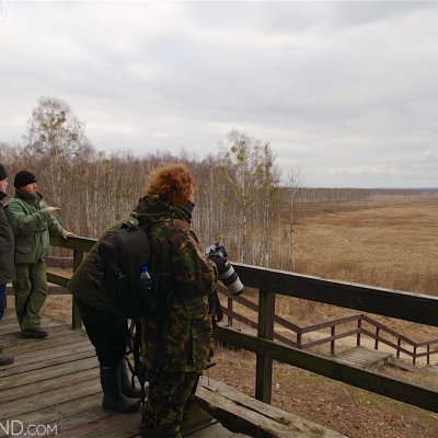 Watching Elks In The Biebrza Marshes. Photo By Andrzej Petryna
