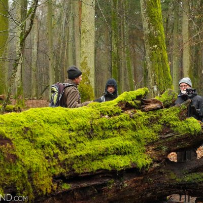 In The Strict Protection Area Of The Białowieża National Park By Andrzej Petryna