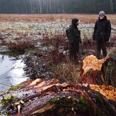 Watching Beaver Evidence In The Białowieża Forest By Andrzej Petryna