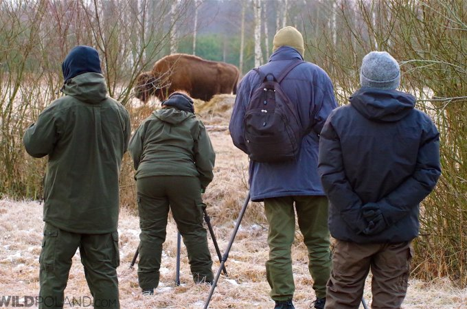 Winter Bison Safari & Wolf Tracking – Feb 2016